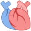 icons8-medical-heart-80.png